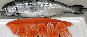 Wild Chinook King Salmon fillets and steaks